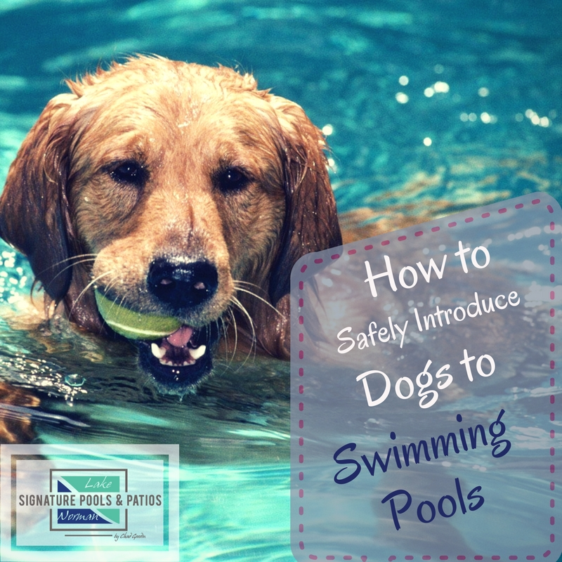 How to Safely Introduce Dogs to Swimming Pools